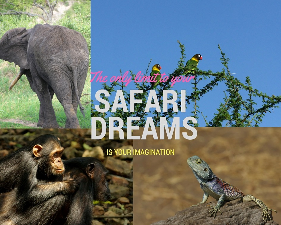Your imagiantion sets the limits of your safari dreams.