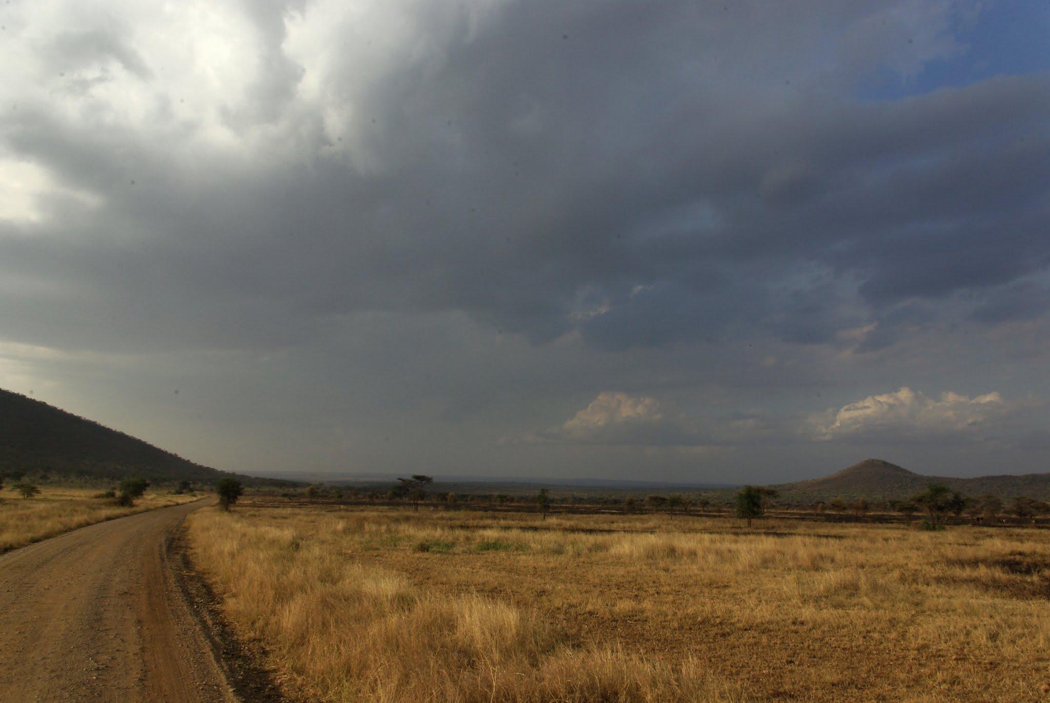 1-serengeti-06-08_dxo