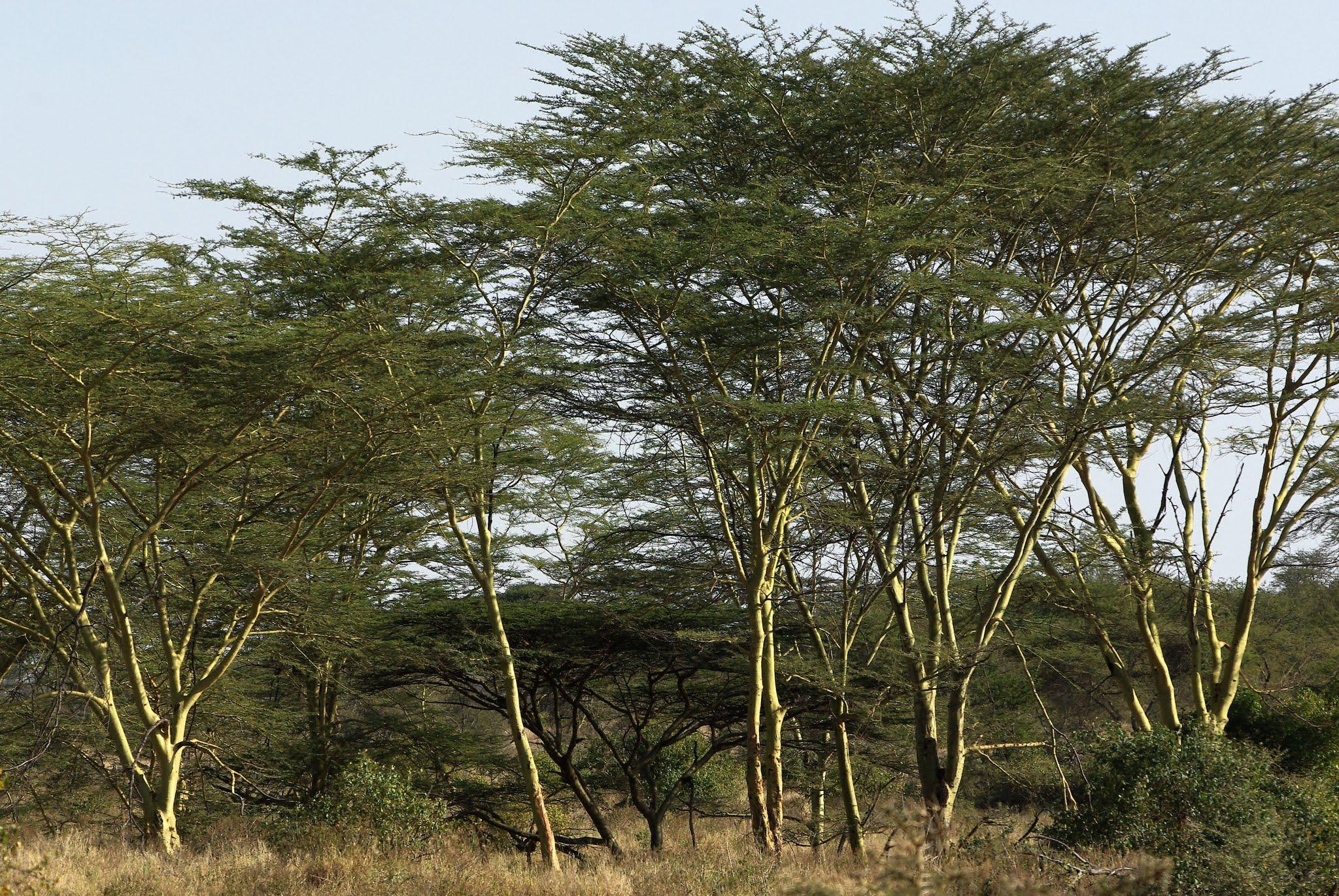 11-serengeti-06-08_dxo