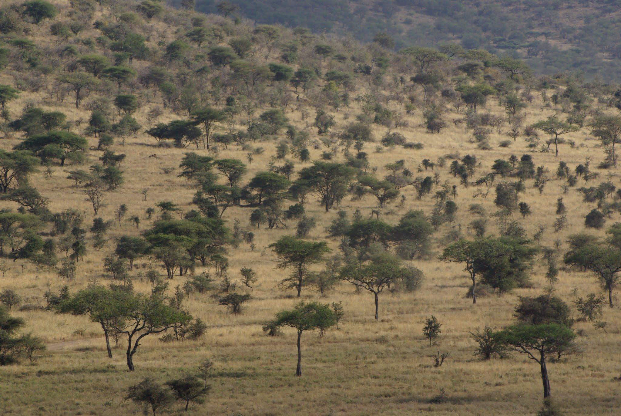 13-serengeti-06-08