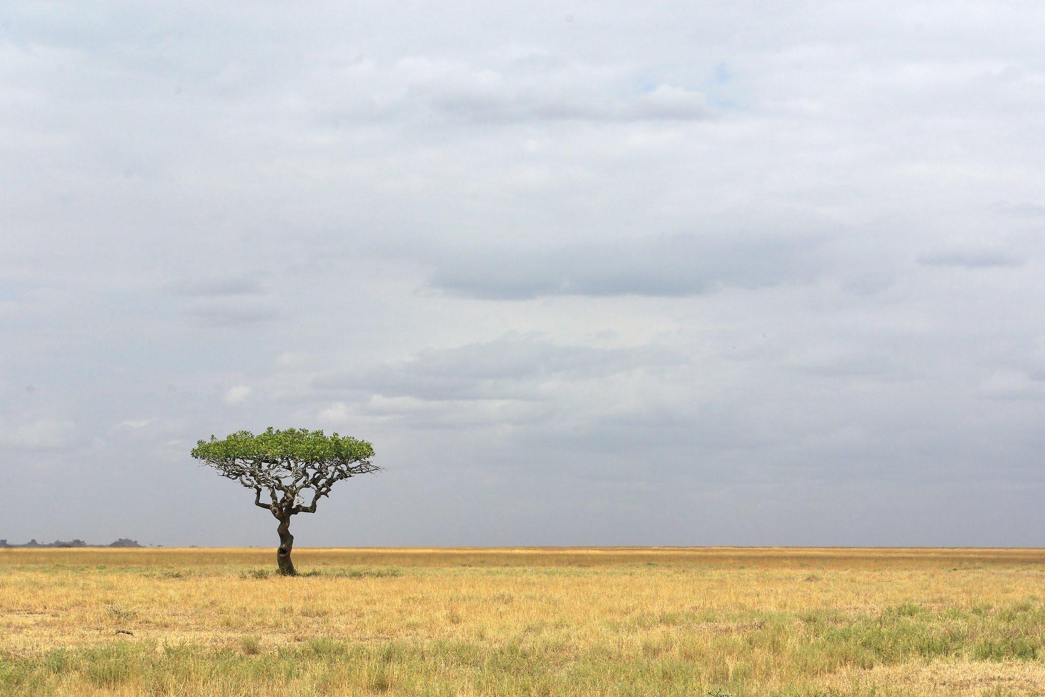 2-serengeti-06-08