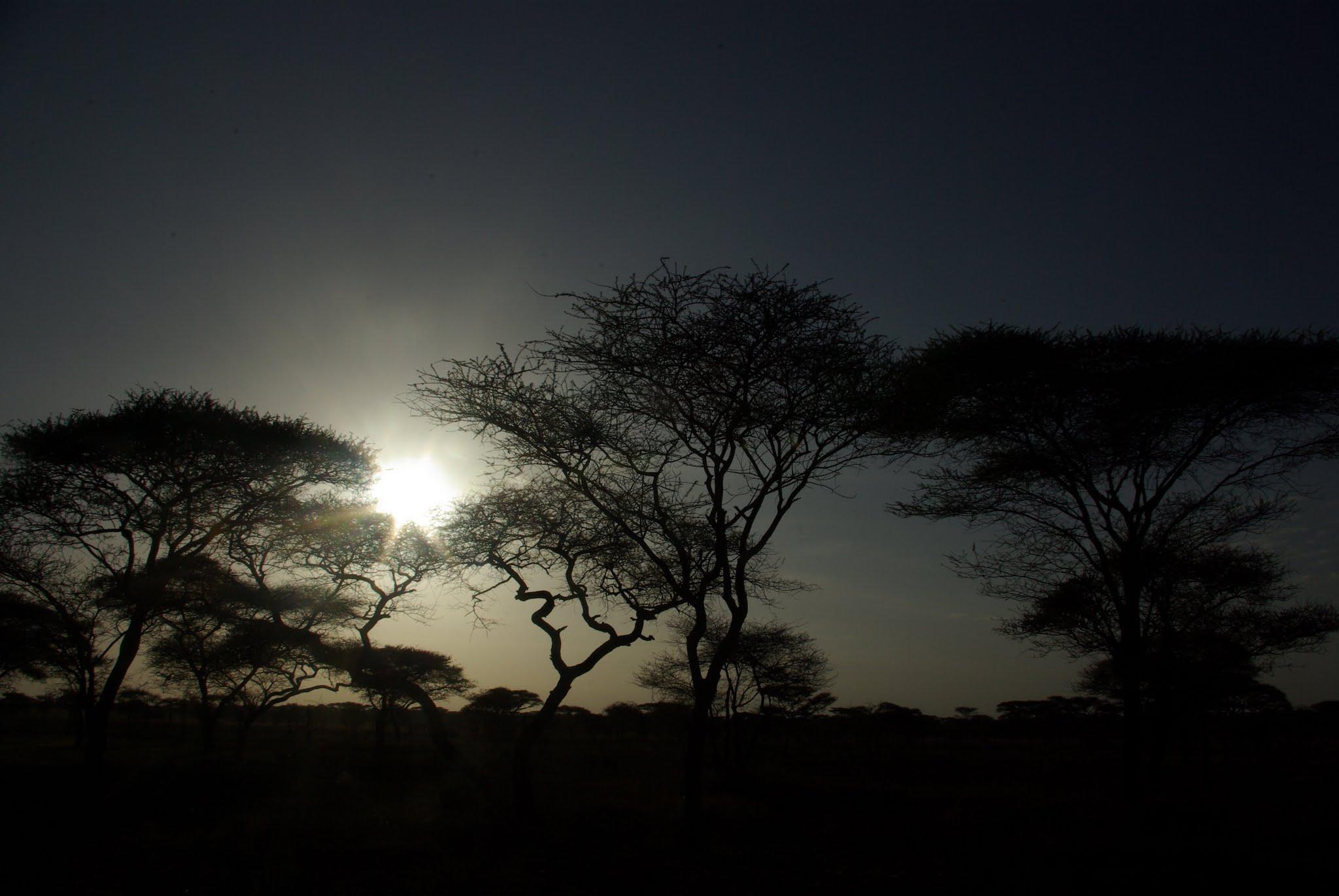 22-serengeti-06-08