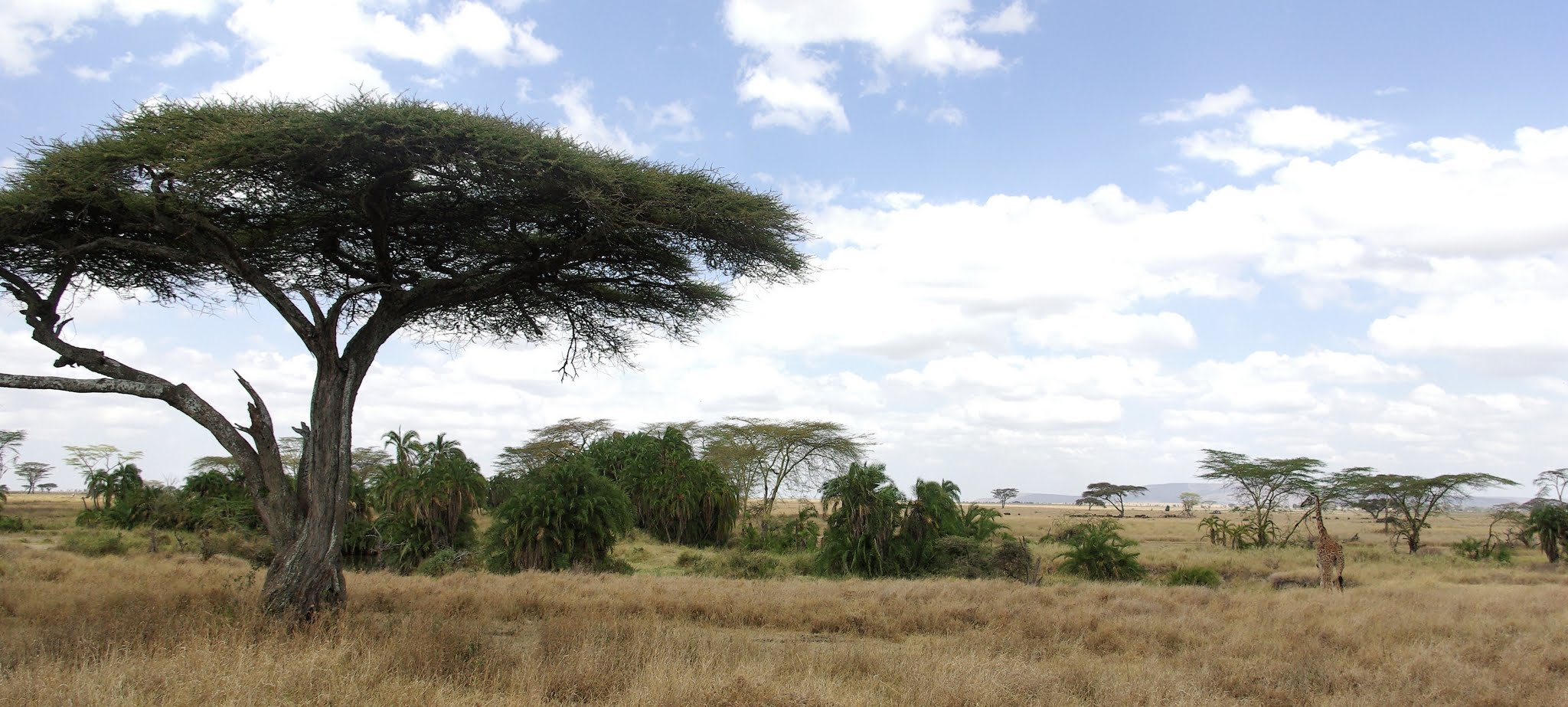 3-serengeti-06-08_dxo