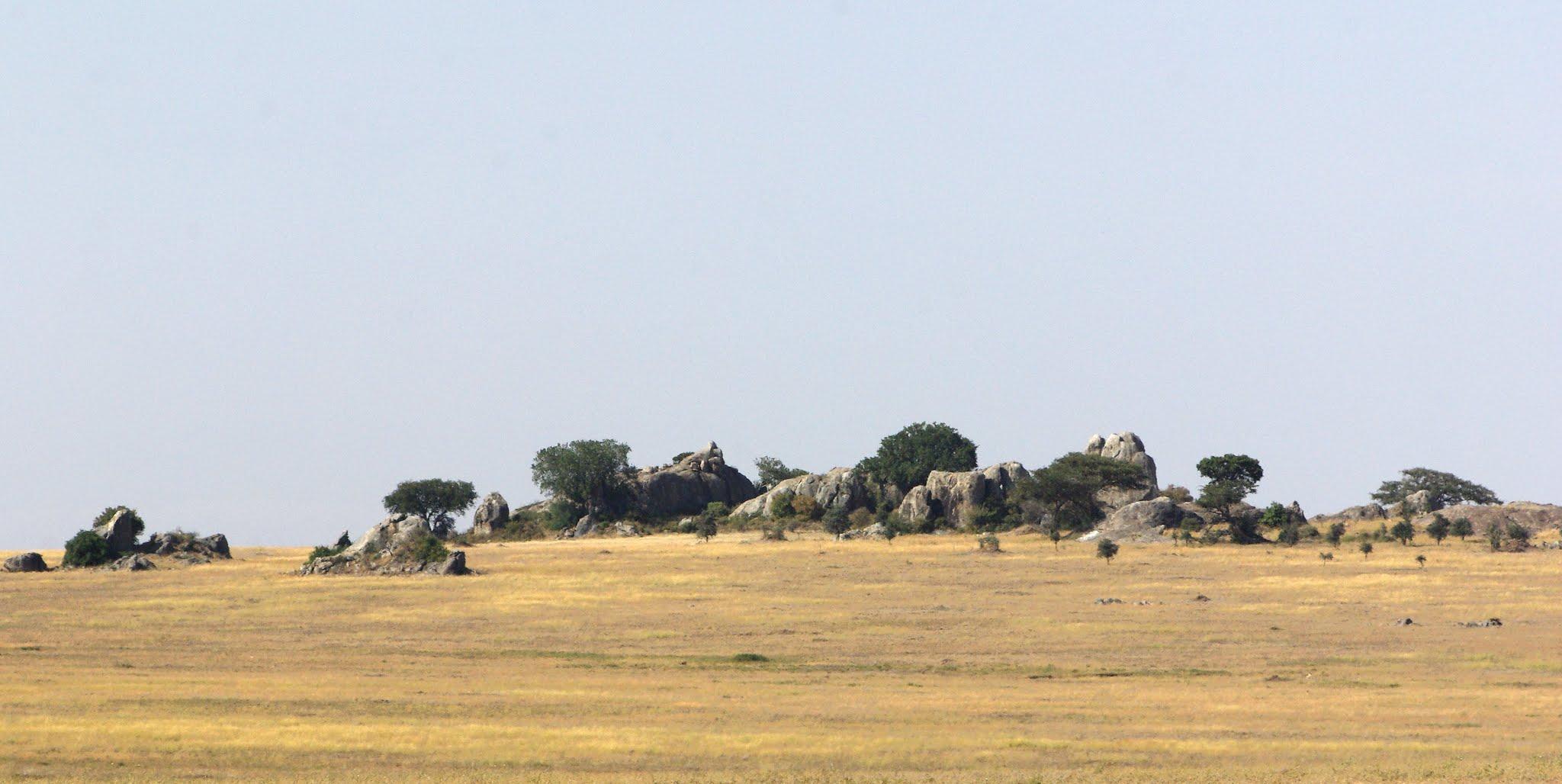 5-serengeti-06-08_dxo