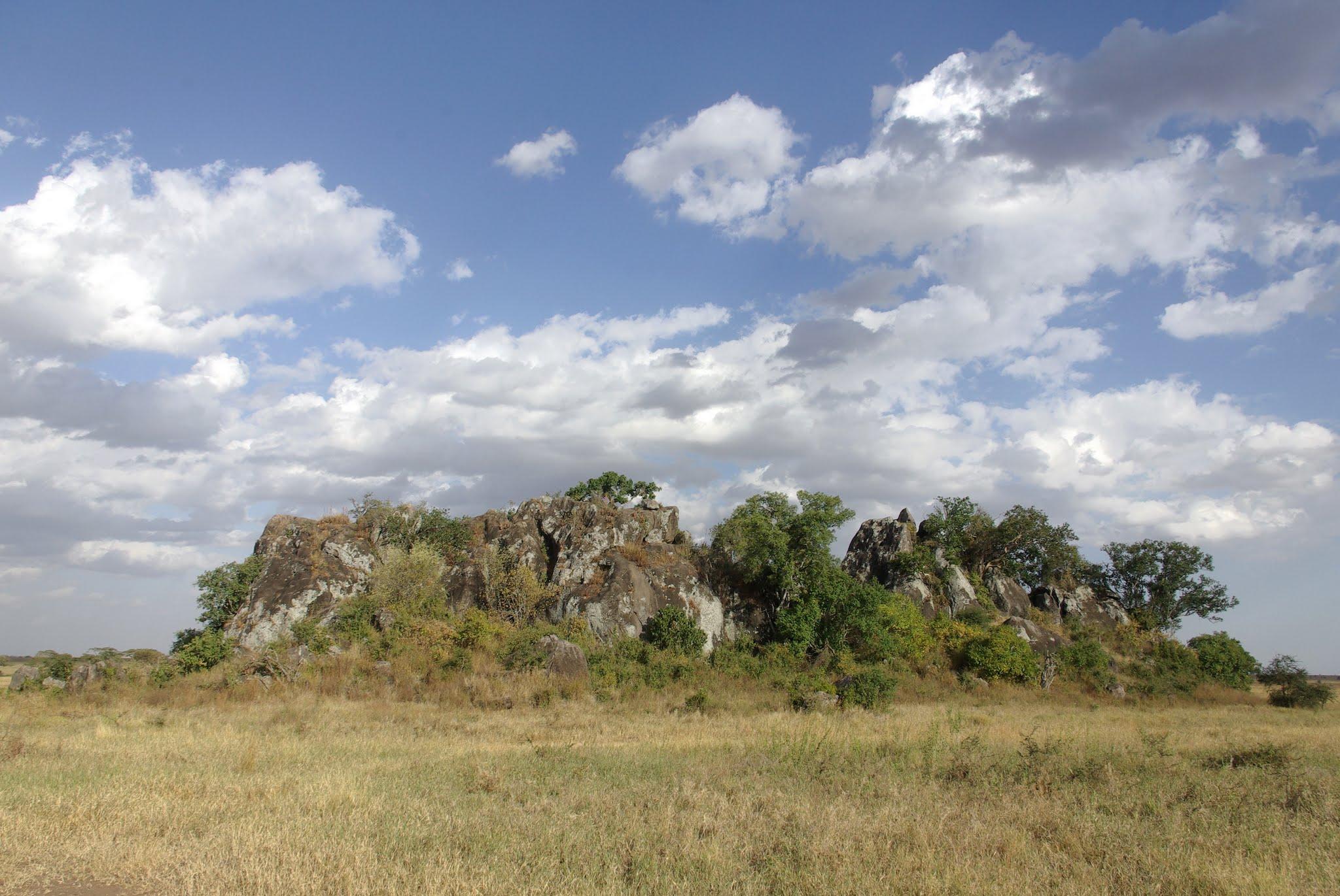 6-serengeti-06-08_dxo