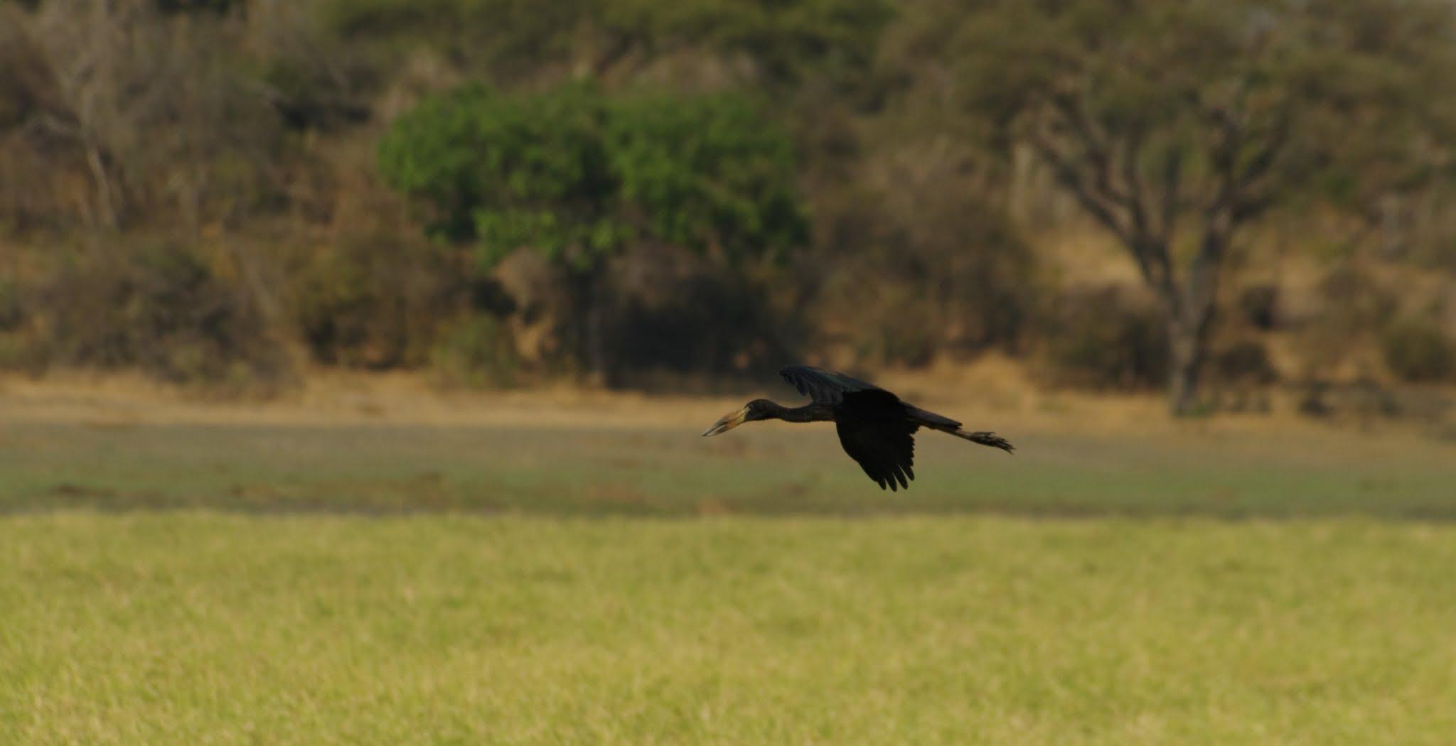 bec-ouvert-africain-katavi-08-14