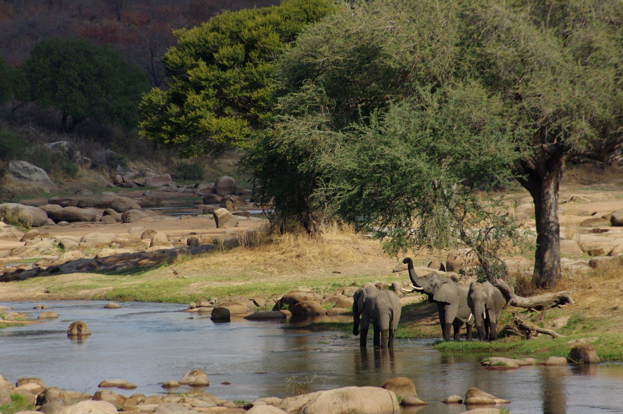 elephant13-ruaha-08-14